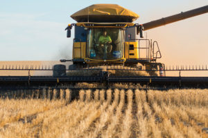 Murraylands Grain Harvest